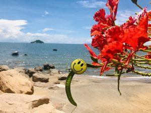 Tourism Friendly Lake Malawi