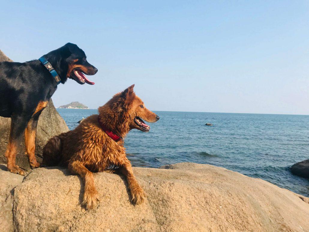 Onze honden Mocha en JayJay genieten ook van het Malawimeer