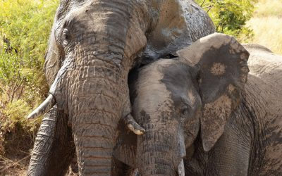 Challenges and success stories of elephants in Malawi