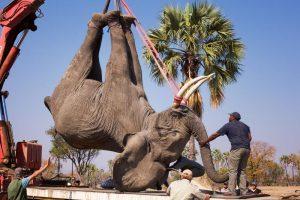 Elephant on a truck