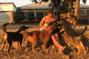 Hessel and dogs