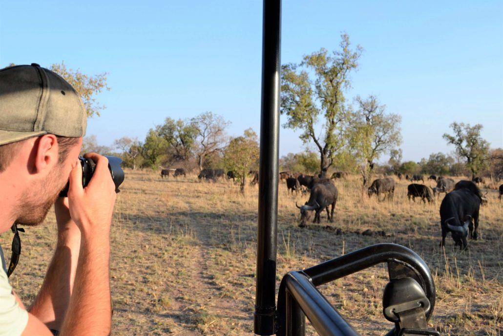 Hessel neemt foto's van buffels