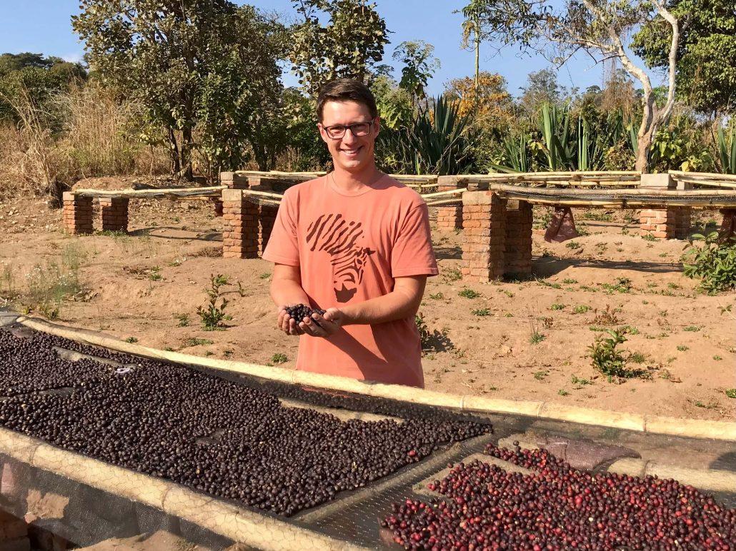 Dilo bij het drogen van Malawi koffie bonen