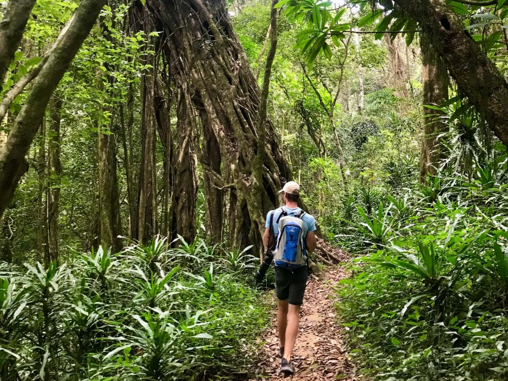 Hessel wandelt langs een grote boom in Ntchisi