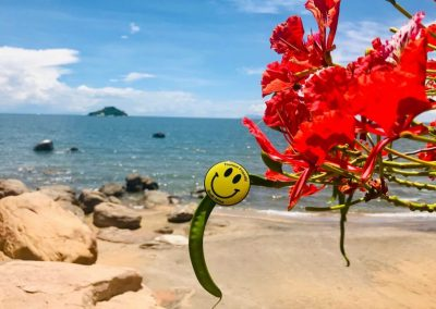 Tourism Friendly logo on flowering plant in front of Lake Malawi